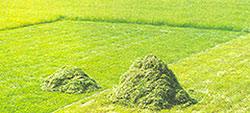 Modern és mezőgazdasági fű